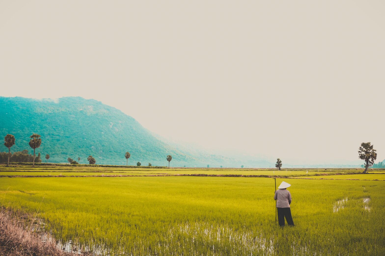 Korean Rice Field. Photo by Loifotos for Pexels